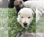 Small #30 German Shepherd Dog