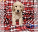 Image preview for Ad Listing. Nickname: Greyson