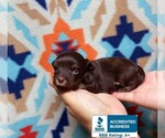 Image preview for Ad Listing. Nickname: Mini Pebbles