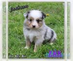 Image preview for Ad Listing. Nickname: Jackson