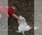 Small Photo #9 Wolf Hybrid Puppy For Sale in FILLMORE, LA, USA