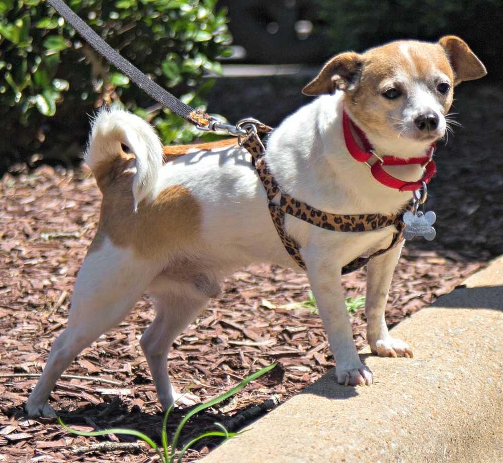 North Carolina Dog Adoption Age