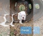 Image preview for Ad Listing. Nickname: Panda