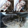 Havanese Puppy For Sale in PENSACOLA, FL, USA