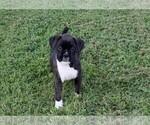 Small #2 Boxer