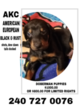 Doberman Pinscher Puppy For Sale in CUMBERLAND, MD, USA