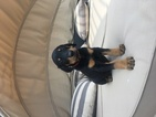 Doberman Pinscher Puppy For Sale in SPRINGFIELD, MO,
