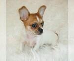 Puppy 1 Cheeks