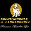 Goldendoodle Puppy For Sale in CLARKSON, NY