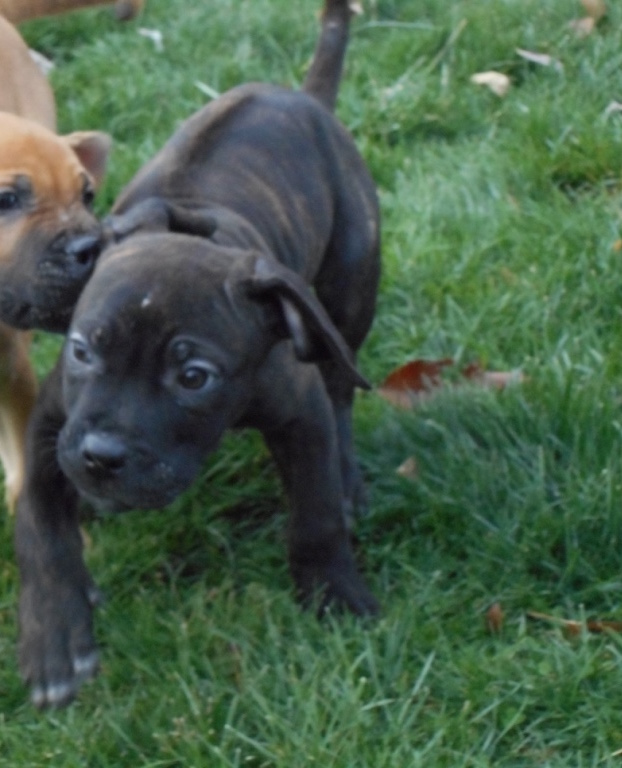 Cleveland Ohio Dogs For Sale