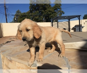 Puppies for Sale near Albuquerque, New Mexico, USA, Page 1