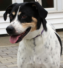Trout - Hound Dog For Adoption