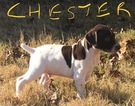 German Shorthaired Pointer Puppy For Sale in SAN ANTONIO, TX, USA