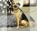 Small #557 German Shepherd Dog Mix
