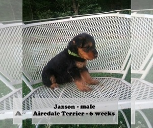 Airedale Terrier Puppy for sale in CLARKRANGE, TN, USA