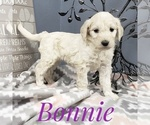 Image preview for Ad Listing. Nickname: Bonnie