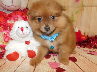 Pom Mix Pup Great 4 Kids  Financing