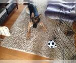 Small #850 German Shepherd Dog
