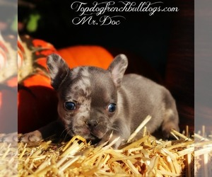 French Bulldog Puppy for Sale in HURON, Tennessee USA