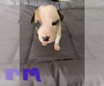 Small #4 American Pit Bull Terrier Mix