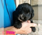 Image preview for Ad Listing. Nickname: Petra