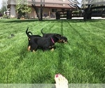 Small #29 Rottweiler