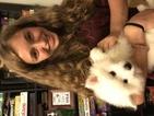 American Eskimo Dog Puppy For Sale in MOUNT VERNON, MO, USA