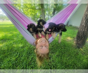 German Shepherd Dog Puppy for sale in FAYETTEVILLE, NC, USA