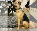 Small #33 German Shepherd Dog Mix