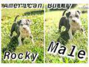 Mutt Puppy for sale in Bloomington, IN, USA