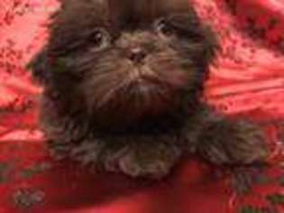 View Ad Mutt Puppy For Sale Texas El Paso Usa