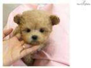 Puppyfinder com: Puppies puppies for sale and dogs for adoption near
