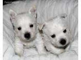 View Ad West Highland White Terrier Puppy For Sale Alabama