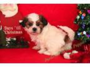 View Ad Mutt Puppy For Sale North Carolina Hickory Usa