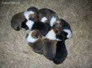 Puppyfinder com: Puppies for sale and dogs for adoption in