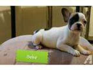 Puppyfinder com: Puppies for sale and dogs for adoption near me in