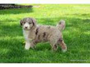 Puppyfinder com: Puppies for sale and dogs for adoption near