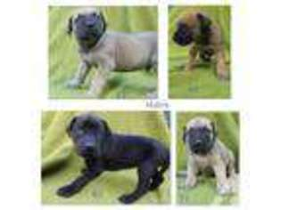 View Ad Mutt Puppy For Sale Near California Redding Usa Adn