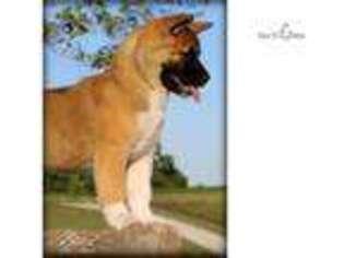 Akita Puppy for sale in Saint Joseph, MO, USA
