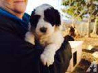 Puppyfinder com: Puppies for sale near me in 54947, Larsen