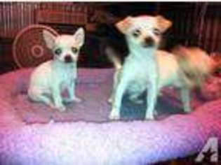 View Ad Yorkshire Terrier Puppy For Sale Mississippi Tupelo Usa