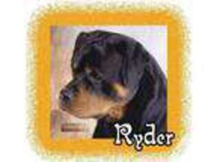 View Ad Rottweiler Puppy For Sale Idaho Coeur D Alene Usa