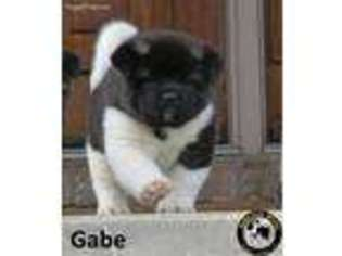Sale In Akita Puppies Indiana For