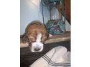 Basset Hound Puppy for sale in Lewistown, PA, USA