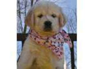 Golden Retriever Puppy for sale in Spencerville, IN, USA