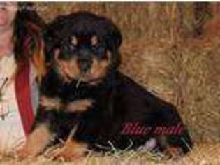 View Ad Rottweiler Puppy For Sale Missouri Licking Usa