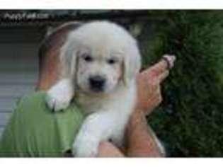 Puppyfinder com: Puppies for sale near me in 13502, Utica