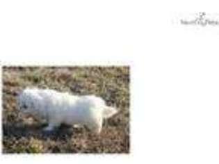 Puppyfinder com: Pekingese puppies for sale near me in West