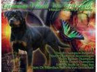 View Ad Rottweiler Puppy For Sale Indiana Bargersville Usa