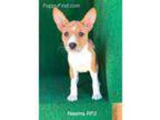 Site Map: Archived Listings of Puppies on PuppyFinder com
